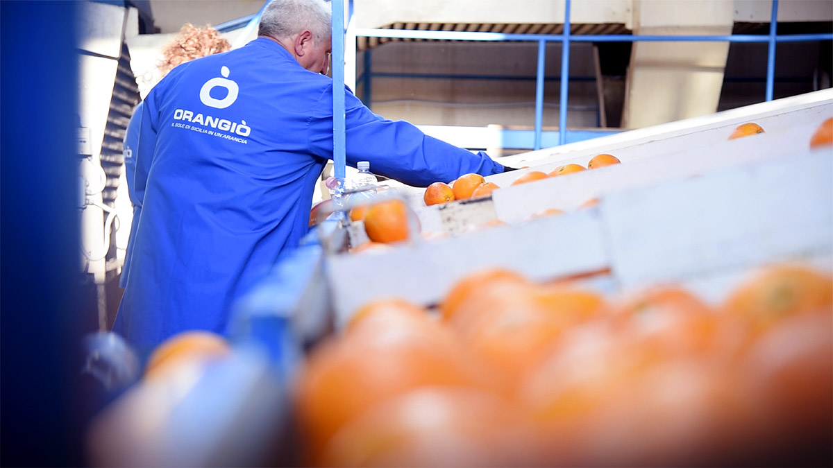 ORANGIÒ, Preparazione arance