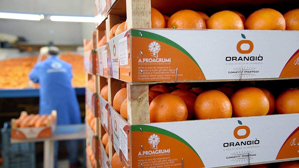 ORANGIÒ, Cassette di arance